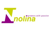 Nolina